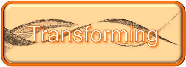 Tuckman Transforming Phase
